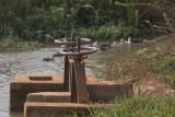 _3883 entre Siem Reap et le Lac Tonle Sap.jpg