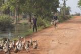_3885 entre Siem Reap et le Lac Tonle Sap.jpg