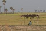 _3892 entre Siem Reap et le Lac Tonle Sap.jpg