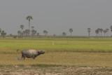_3893 entre Siem Reap et le Lac Tonle Sap.jpg