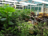Kennesaw State University Greenhouse, 6 months after move-in