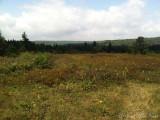 Dolly Sods Wilderness, WV
