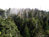 View from Clingman's Dome summit