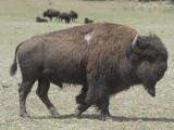 Mammals: AZ 2014
