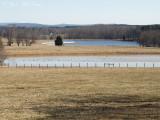 Bartow Co. farm ponds with 600+ waterfowl