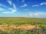Prairie roadside: Weld Co., CO