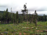Meadows campground: Routt Co., CO