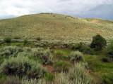 Gunnison Basin sagebrush habitat: Gunnison Co., CO