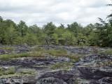 Sandstone glade: Etowah Co., AL