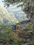 Cliffside Harper's Dodder and Bigelowia nuttallii: Little River Canyon National Preserve, DeKalb
