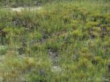 Sandstone outcrop community; Marion Co., AL