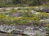 Moss Rock Preserve: Jefferson Co., AL