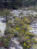 Town Creek Sandstone Glade: DeKalb Co., AL