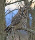 13 LONG EARED OWL-JIM BASINGER.jpg