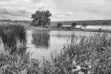 Beaver pond at Tuttle Creek.jpg