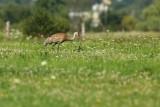 birds_of_canada_les_oiseaux_du_canada