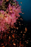 A healthy reef.JPG
