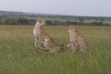 Wildlife Around the World