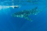 Linda and Whale Shark