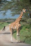 Lake Nakuru and Amboseli National Park 2016