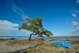 Tulapos Marine Sanctuary D700b_02585 copy.jpg