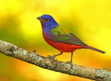 Songbirds and other small birds