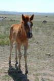 The Black Hills Wild Horse Sanctuary