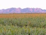 Sonoran Desert Irrigation