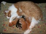 Kattungarna 1 vecka