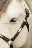 Equine Photos