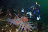 Scuba Diving Tahsis BC with Tahtsa Dive Charters