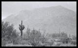 It Rained in the Desert