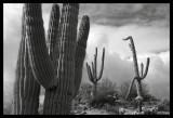 Cactus Conversation