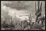 Desert Guardians