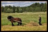 Work and pleasure with North Swedish horses