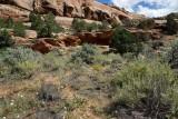 Colorado National Monument 16