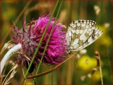 Insects, Bugs  and Butterflys.
