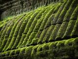 20130926_Angkor Wat_0167.jpg