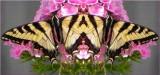 Nectar Posse