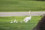 Animal Kingdom Comes to Bloomfield Hills