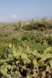 Aruba 2014-92.jpg