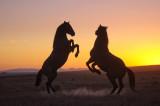 Sundown Action in the desert.