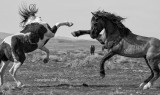 Wild Stallion Kung Fu.