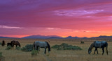 Mustang Sunrise.