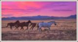 Wild West Mustangs