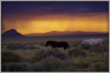 Thunderstorm in the desert.