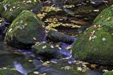 A Walk Along Beaver Brook