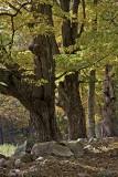 Berkshire Fallscapes