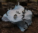 A colony of penguins by students at Jindabyne Central School stage 3.jpg