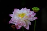 LLC_Garden